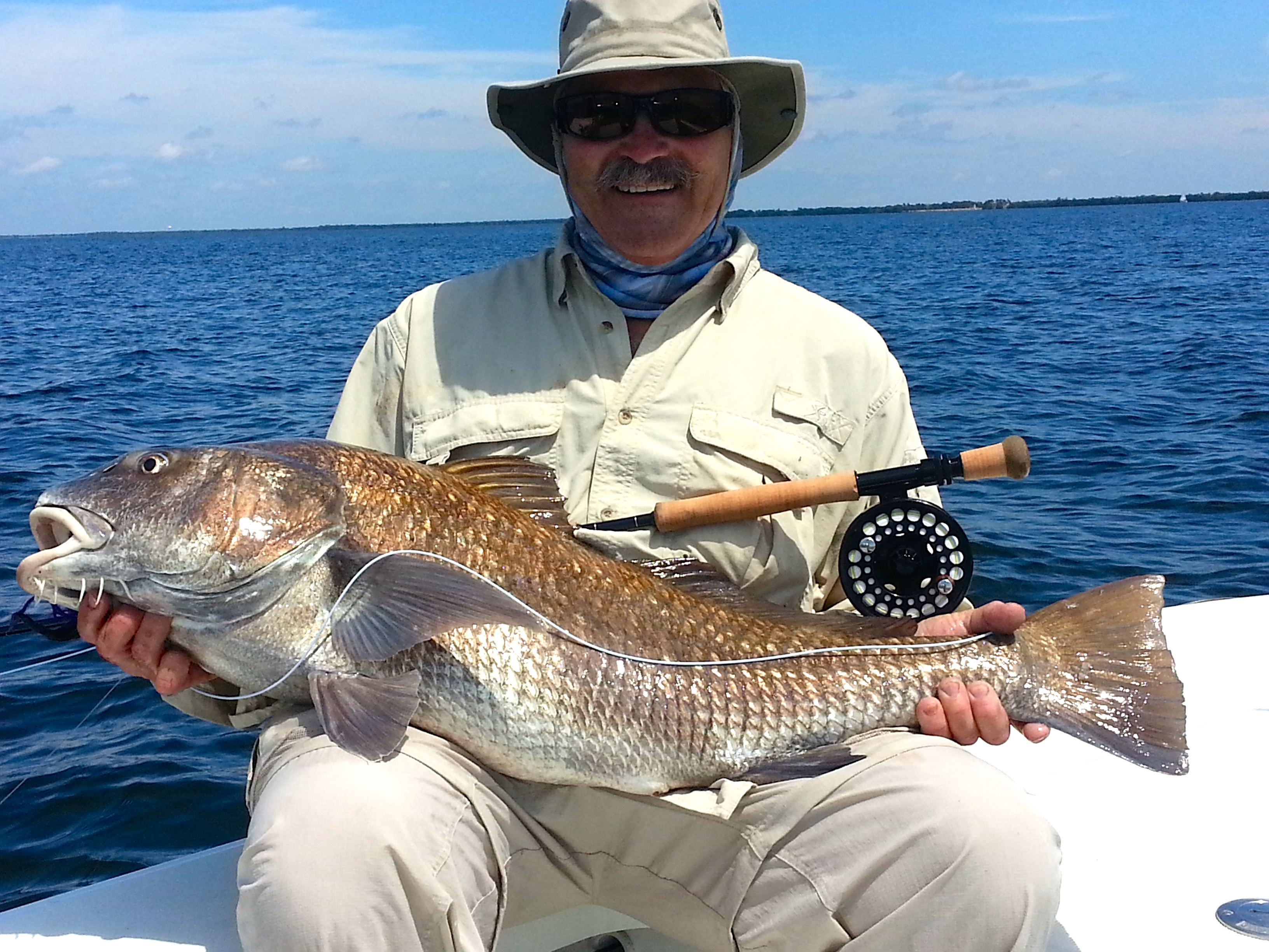 45lb black drum on fly backcountry flats fishing for South florida fishing