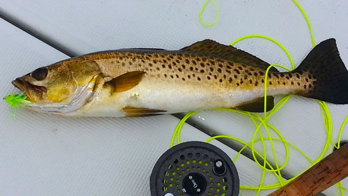 Trout on Fly
