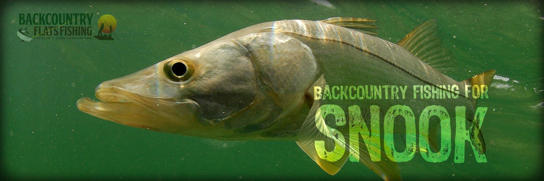 Snook Fishing South Florida