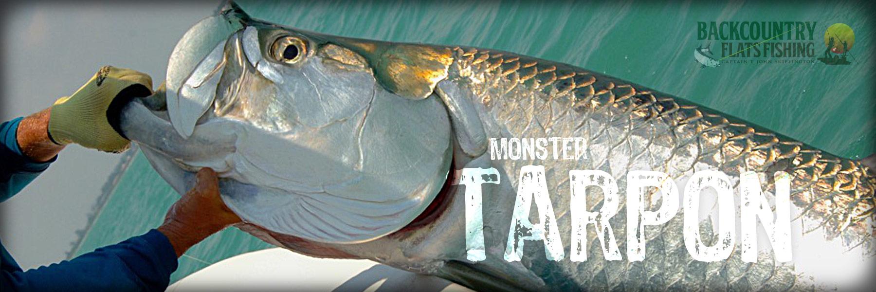 Monster Tarpon Fishing Everglades
