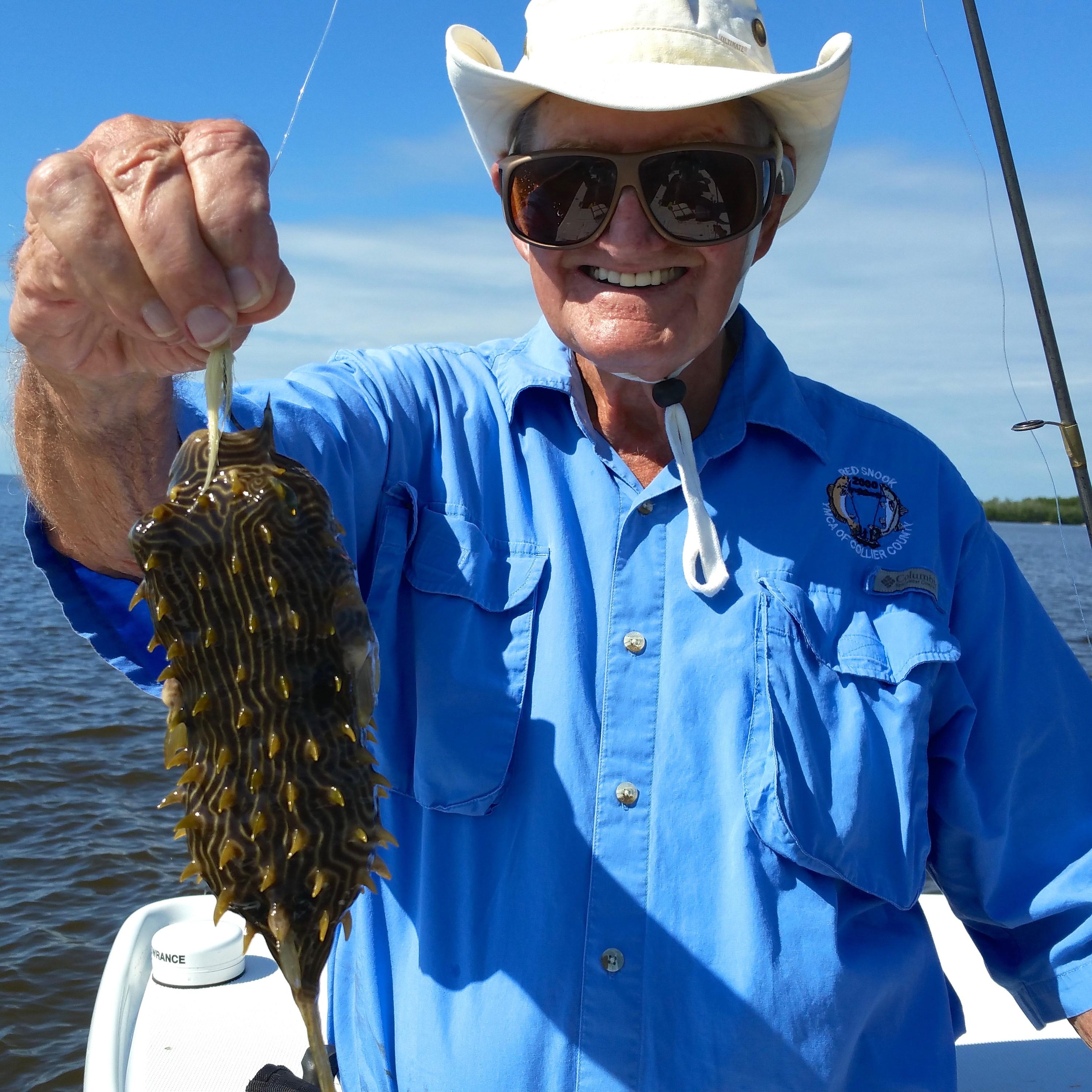 Everglades Porcupine Fish